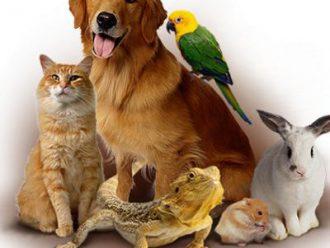 Ветеринарные услуги на дому